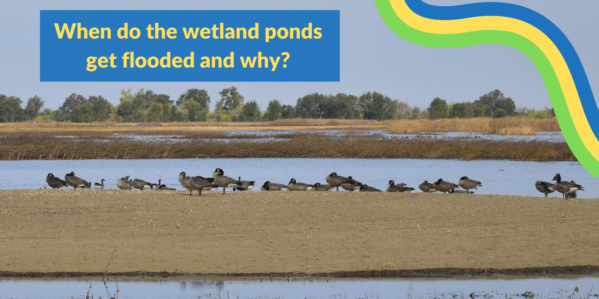 Click to watch a video and learn about flooding at Cosumnes River Preserve!