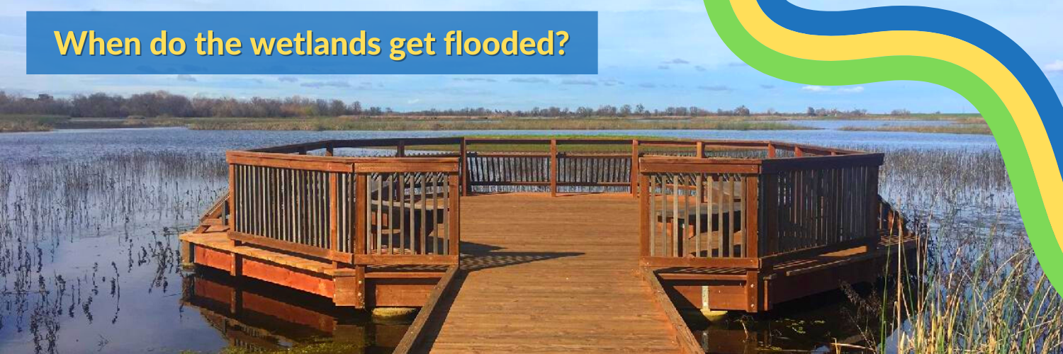 Learn more about when and why Preserve staff flood the wetlands ponds. Click here to learn more!